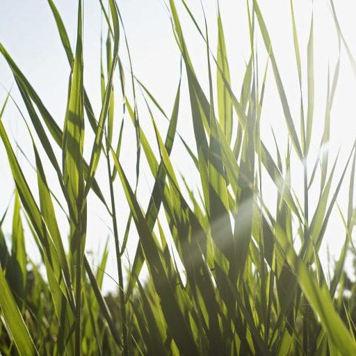 Macawber Engineering, Inc. | Dense-Phase Pneumatic Conveying | Biomass